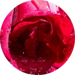 ROSE ABSOLUT | ÄTHERISCHES ÖL | BIO