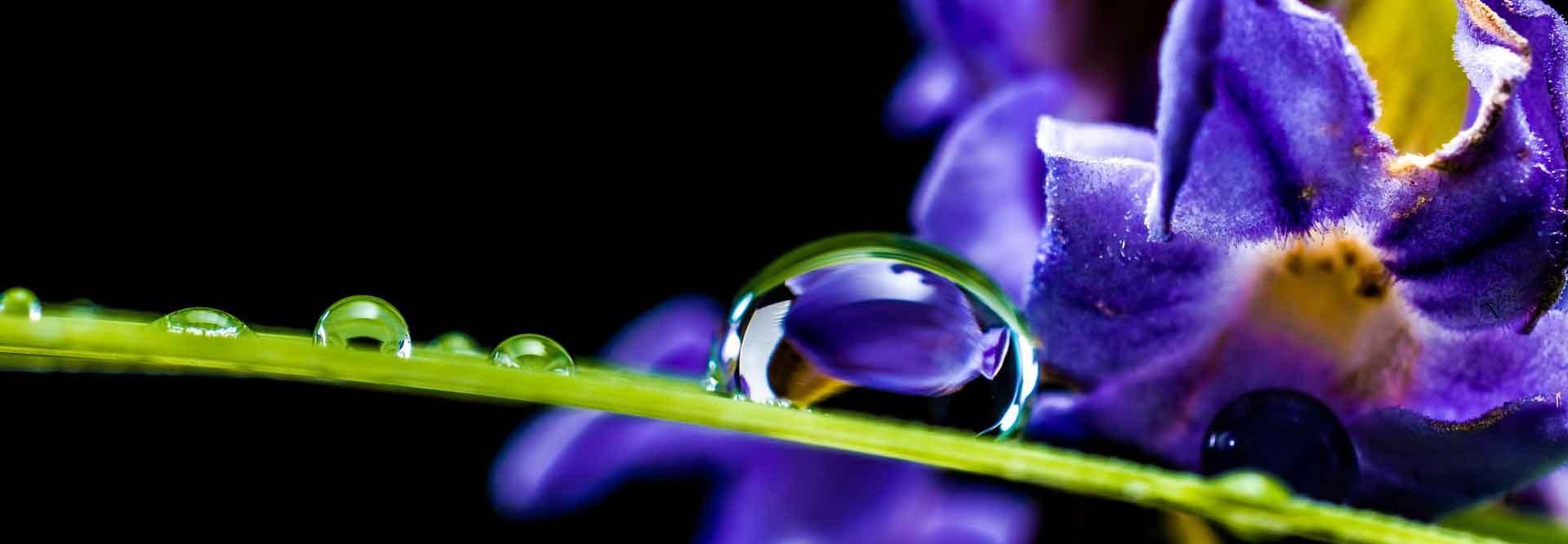 Ätherische Öle. Living Libation, Frei von Gentechnik, synthetischen Düngemitteln, Pestiziden, InsektizideN, HerbizideN